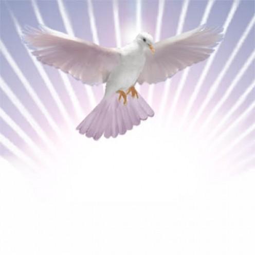 The HOLY SPIRIT Rises!