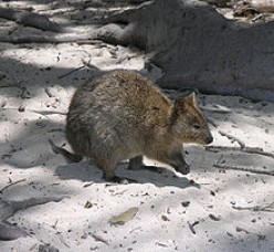 A great day out is a visit to Rottnest Island and seeing the Quokka's ! Snorkeling is good here as well.