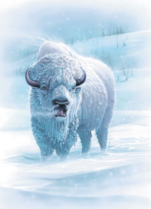 The vision of the white sacred bison held deep meaning for the plains First Nations. Occurrences of such an animal is rare and thus potent with meaning.