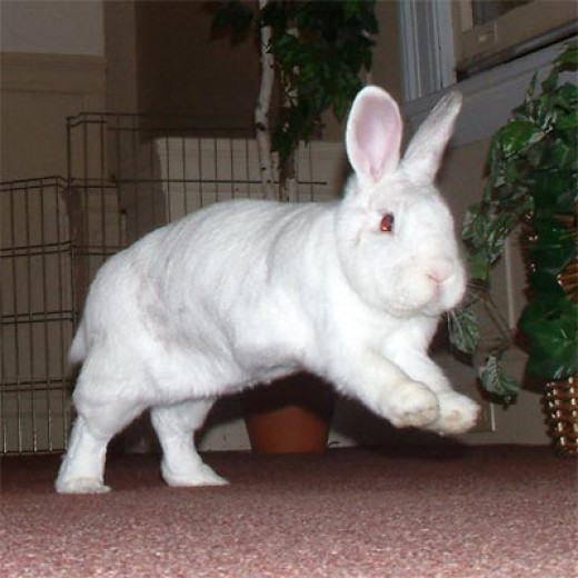 A happy bunny in mid jump!