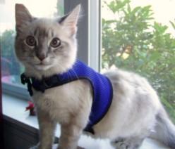 Adventures in Service Cat Training.