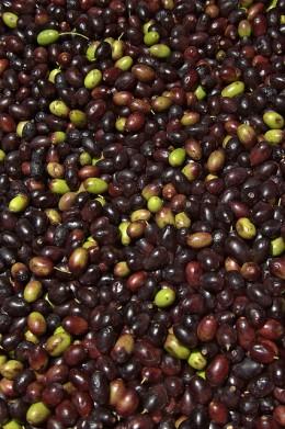 Ligurian Olives