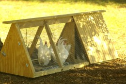 Great chicken coop for bantams or 2 regular size hens