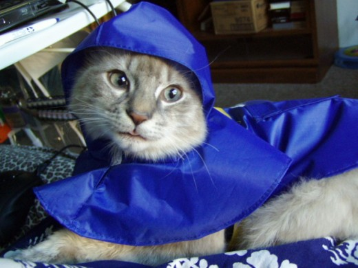 Willetta models her new rain cape. Much to my surprise, she adapted even to the hood.