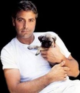Aww, even George Clooney loves him some Pugface!