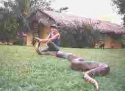 The Green Anaconda:  World's Heaviest Snake.