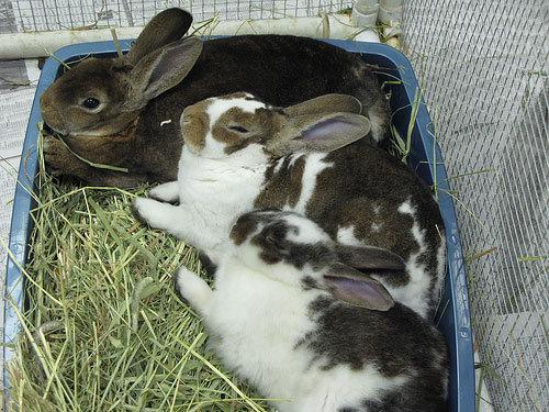 Bunnies sharing a litterbox.