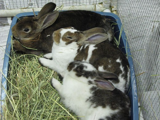 Bunnies sharing a litterbox.