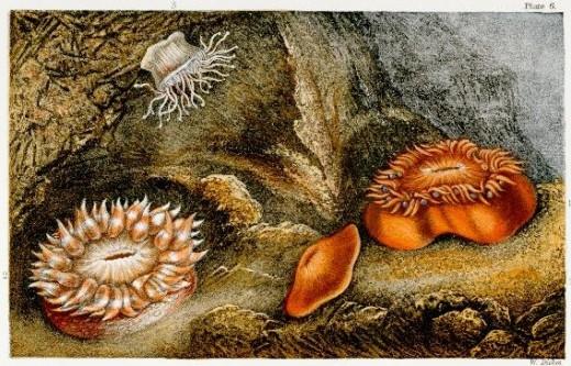 Sea Life (William Dickes, 1873)