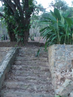 Steps to the house.  Heliconia at the top.