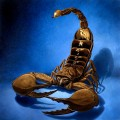 The Scorpions And Their Scorpion Namesakes