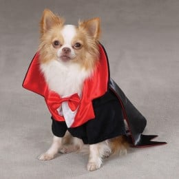 Does your pet like Halloween?