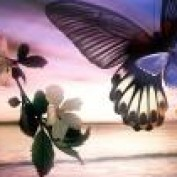 almirah profile image