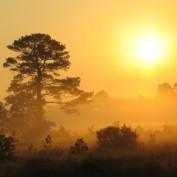 daybreak profile image