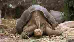 Lonesome George's plight has stirred people everywhere.