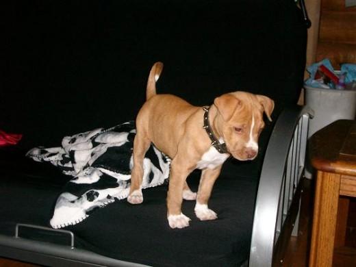 Bowser was such a little fellow