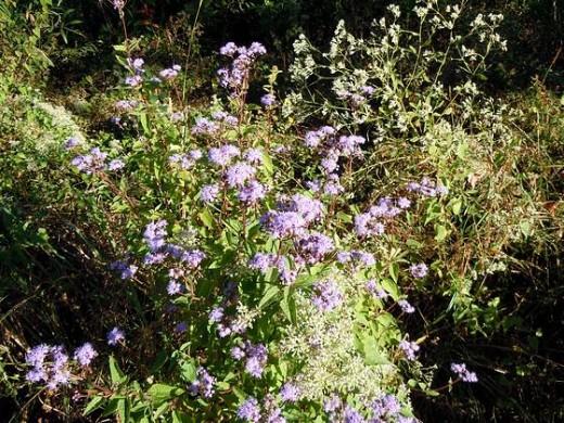 Wildflower #2