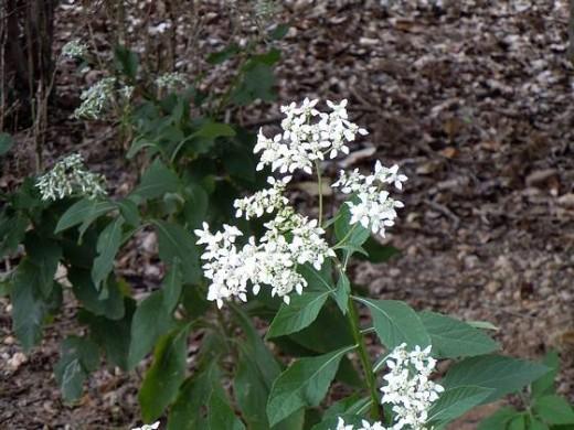 Wildflower #5