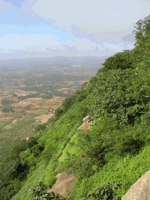 Hillside view of Nandi