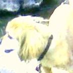 My God Dog Benji