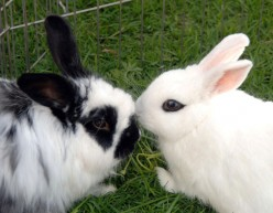 Bunny Love: How To Tell If Your Bunny Loves You