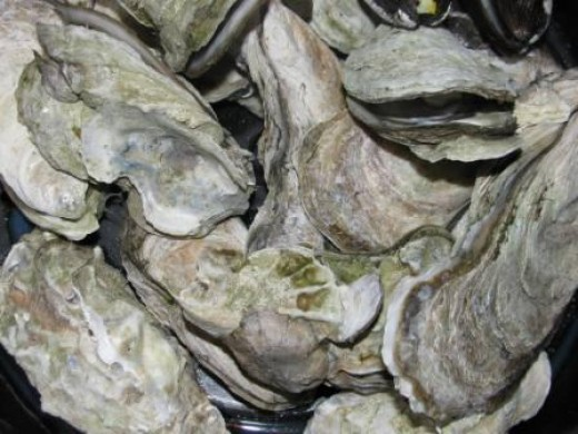 Steamed oysters, ready to eat.