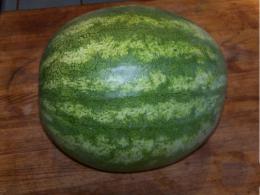 A Seedless Watermelon