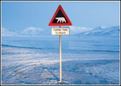 Threat To Polar Animals Due To Global Warming