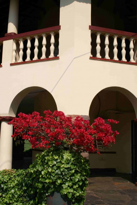 A bougainvillea blooming at a corner of the pavilion