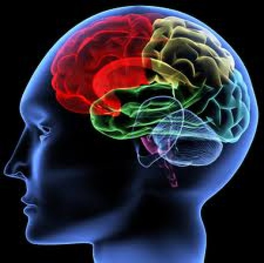 Colorful brain activity occurs when love is on the mind!