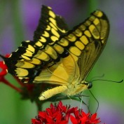 Butterfly12345 profile image