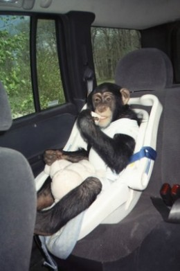 Bow always traveled in private transportation, because public transportation considered him cargo.