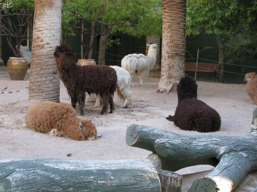 There are even Llamas in the Secret Garden.