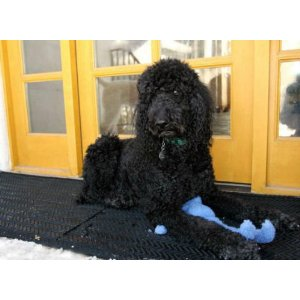 Your Pets will love your Outdoor Snow and Ice Melting Electric Heated Door Mat.