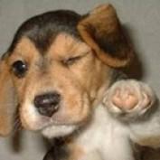 puppypaws profile image