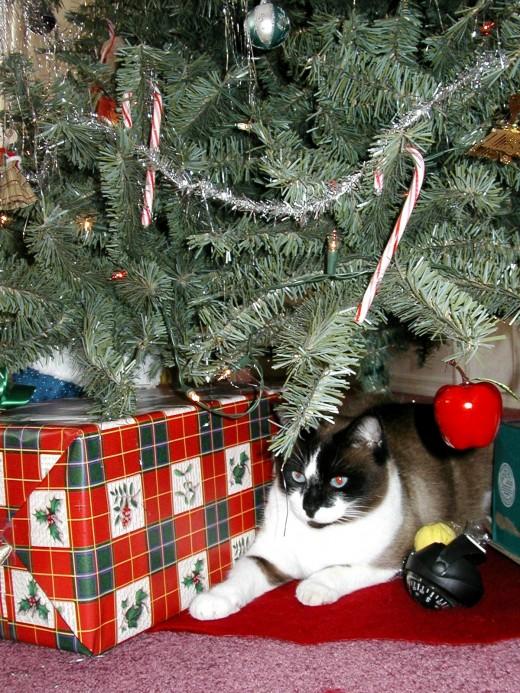 Even cats enjoy Christmas