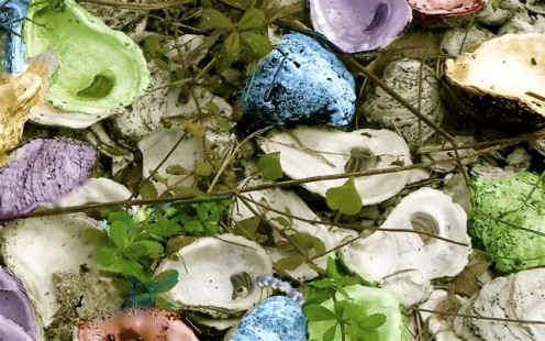 Oyster shells, (I added the colors)