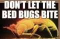 Bed Bugs, Bed Bugs - Are You In Bed With Me?!?