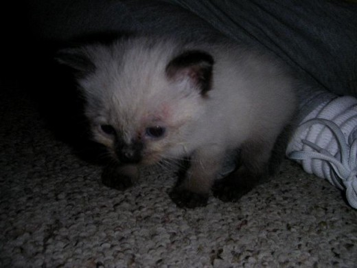 Domino when he first arrived.