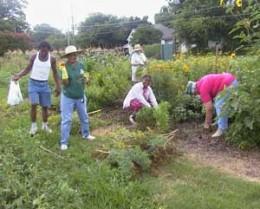 Gardeners working in Herb Garden