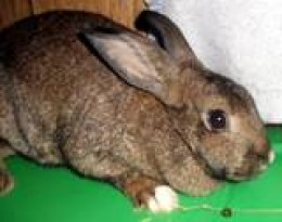 In the first Depression Rabbits saved the lives of many who happened to have some as pets. They breed relatively quickly and supply health meat. Any breed will do, even mixed breeds.