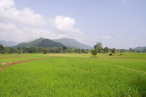 View of a paddy field with mountains and blue sky in the back-drop, Mahiyanganaya