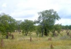 Termite mound tombstones