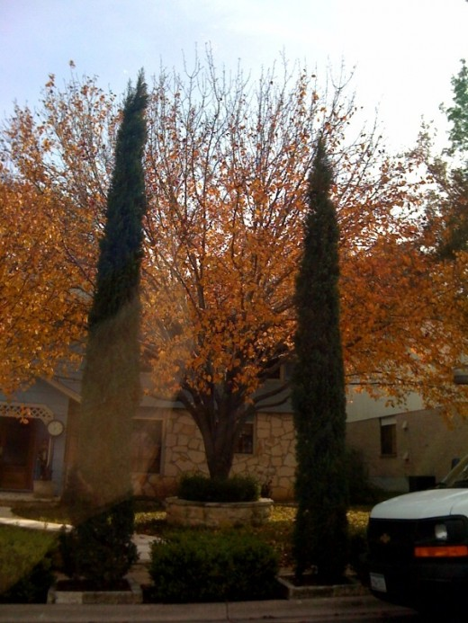 Fall 2009 was amazing for our area.