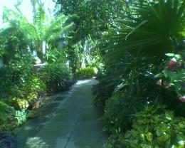 Path through tropical plants in the Orangerie