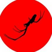 jamiekingmedia profile image