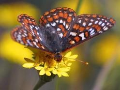 Send me butterflies