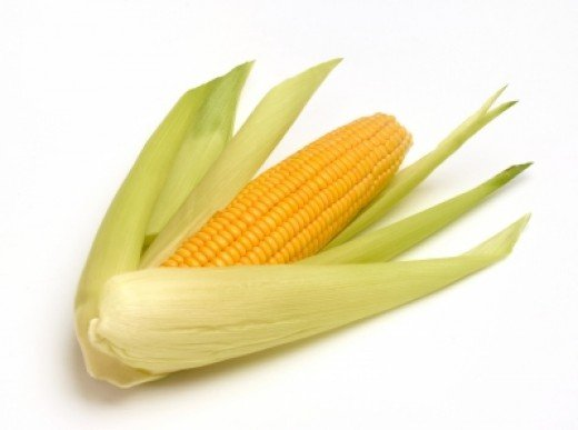 Ear of fresh sweetcorn.