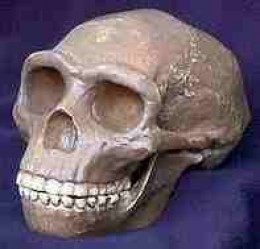 Cast of Peking Man Fossil (original lost)