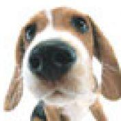 WeLoveOurDogs profile image